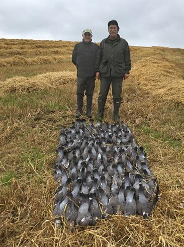 Caccia colombacci Irlanda